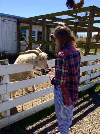 Tillamook, OR: Feeding the farm animals