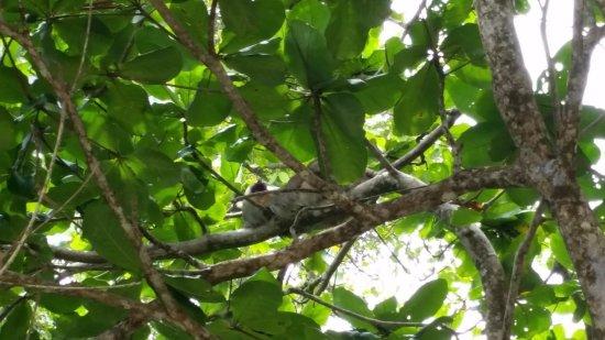 Manzanillo, Costa Rica: Sloth in a tree