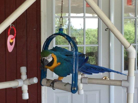Fairfield, PA: Rescued Bird