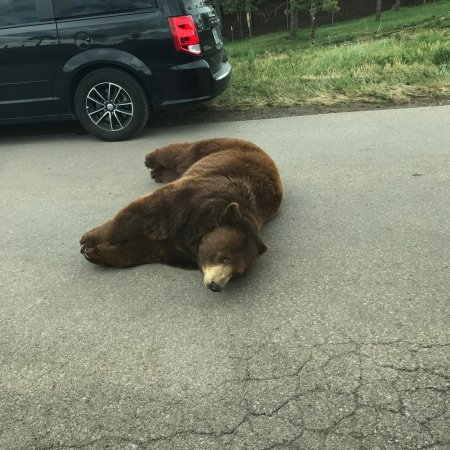 Bear Country USA: photo5.jpg