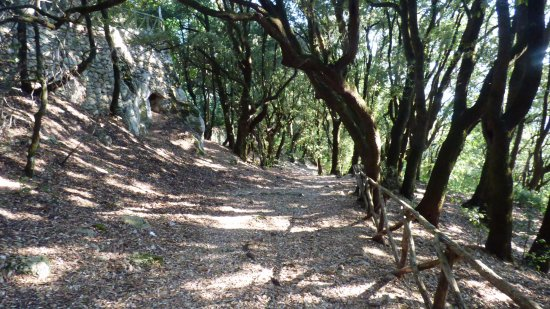 Albergo Paradiso: Percorso bosco sacro