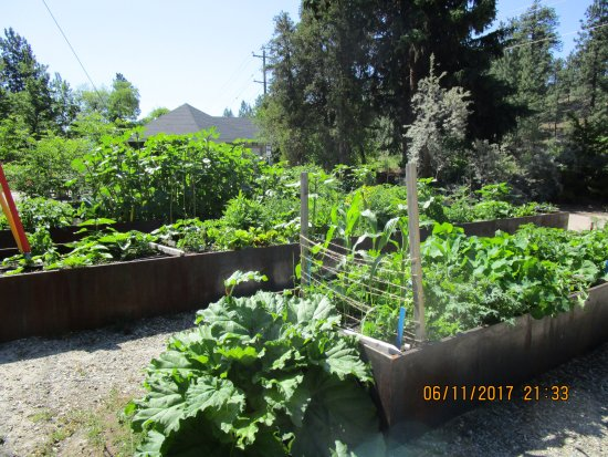 Summerland, Canada: Raised Beds In The Vegetable Garden.