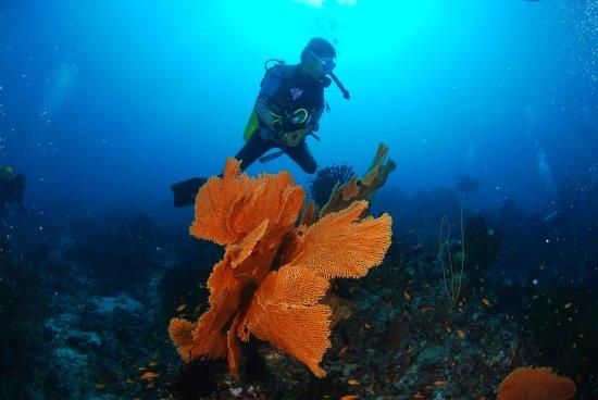 Pulau Weh, Indonesia: Dive