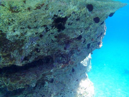 Alimos, Hellas: Koufonisi under water shot