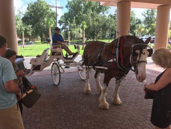 Hilton Ocala: photo7.jpg