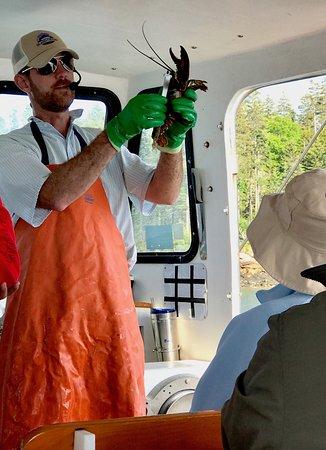 Bass Harbor, เมน: Lobster measuring demo