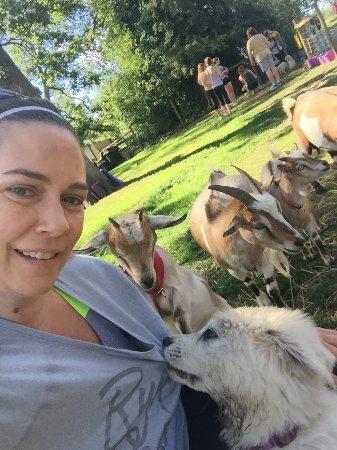 North Saanich, Kanada: Puppy and goats