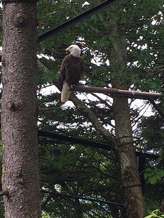 Banner Elk, NC: photo7.jpg