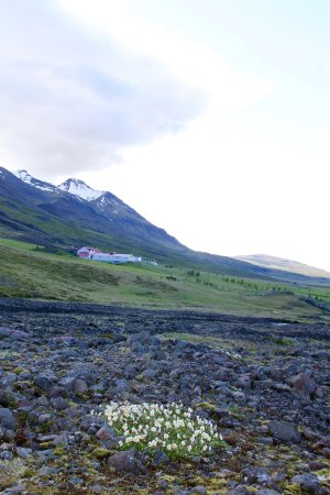 Breiddalsvik, ไอซ์แลนด์: Silfurberg from morning walk
