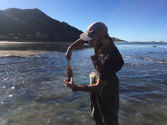 Gisborne, Nya Zeeland: Bonus add — crayfish or rock-lobster.