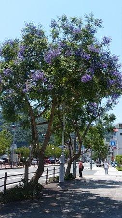 Jacaranta Flowers