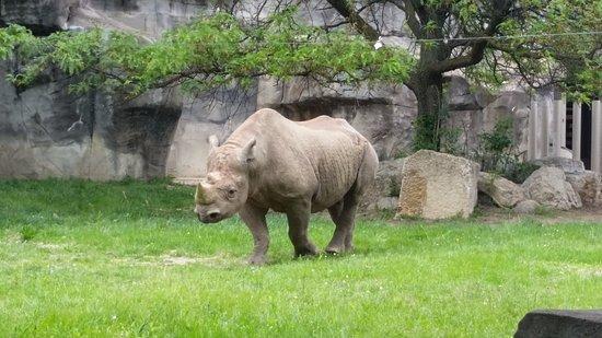 Brookfield, إلينوي: Rhino!