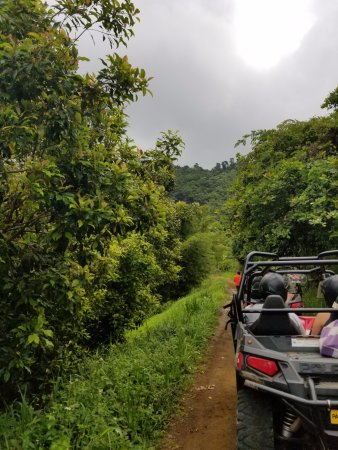 Saint George Parish, Grenada: Rain forest trail