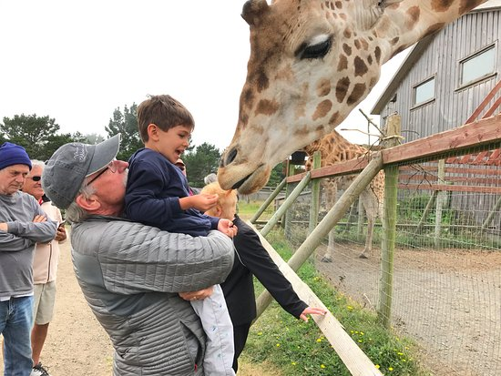 Point Arena, CA: grandpa and grandson feeding one of the giraffes