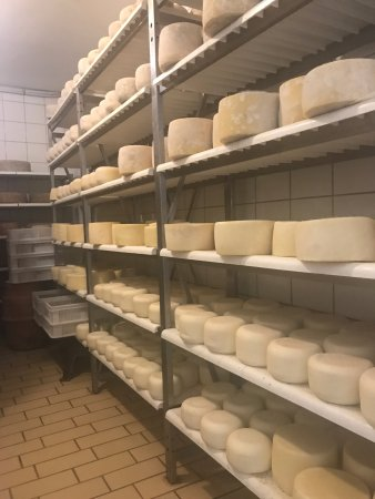 Pienza, Italy: Aging Cheese