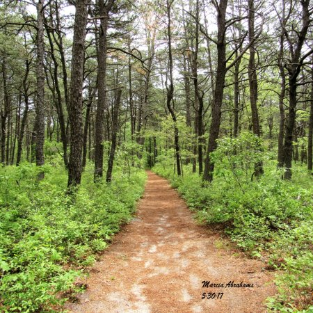 Quogue Wildlife Refuge Hiking Trail 5-30-17