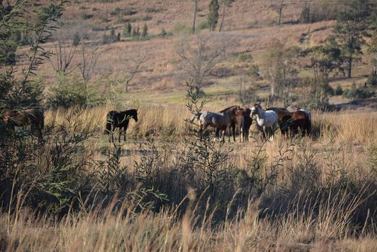 Wild Horses Lodge-billede