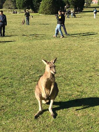 Morisset, Australia: photo0.jpg