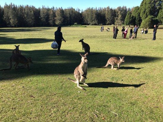 Morisset, Australia: photo1.jpg