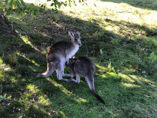 Morisset, Australia: photo3.jpg
