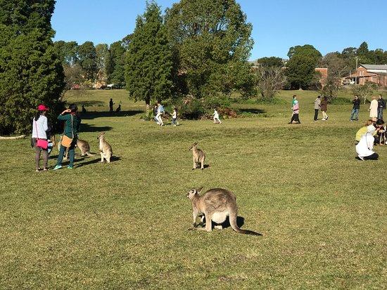 Morisset, Australia: photo4.jpg