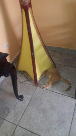 Bocas Paradise Hotel: Este gato se encontraba por todas partes ensuciando con heces y orine.