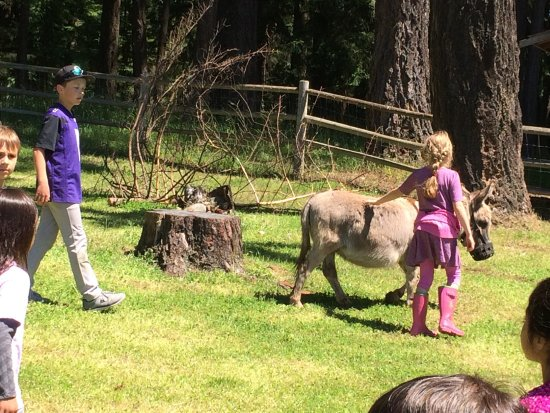 Eastsound, WA: Mount Baker Farm & Campground