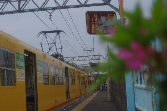 Yokkaichi, Japan: 旬の花と北勢線