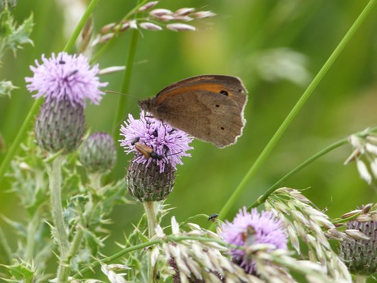 Ludham, UK: Butterfly