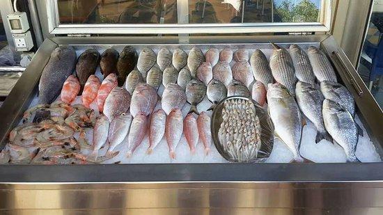 Sidon, Lebanon: Freshly selected fish from the Saida sea.