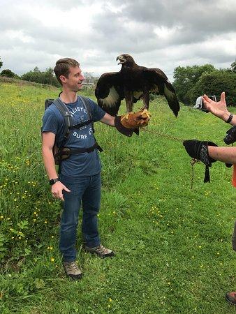 Haverfordwest, UK: Midas the Golden Eagle
