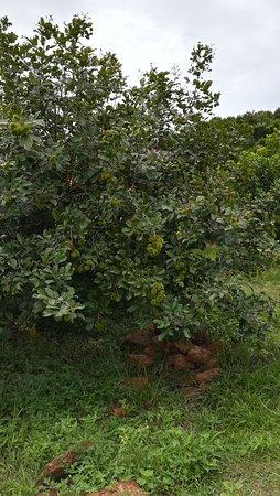 Kep, กัมพูชา: Sothy's Pepper Farm