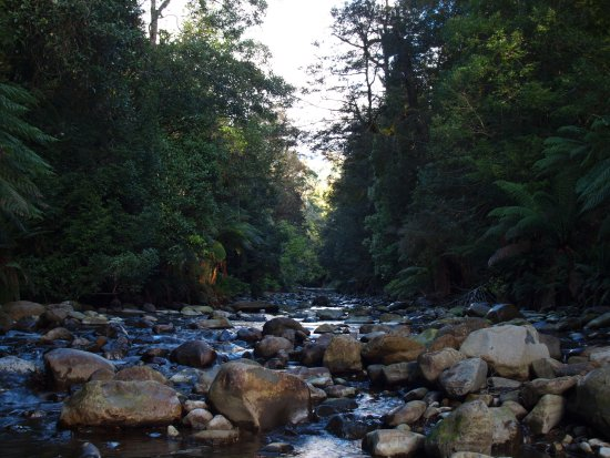 Deloraine, Australië: Liffey River that flows along side of the track.