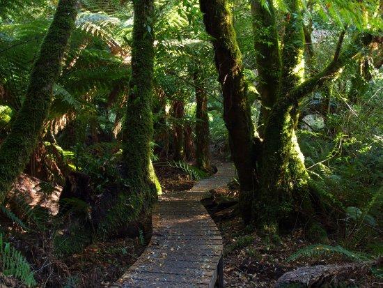 Deloraine, Australia: Along the walking track.