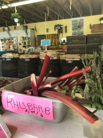 Keremeos, Kanada: My first time seeing rhubarb stalks