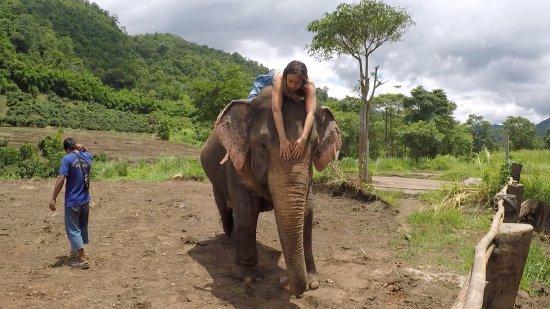 Baan Tung Lakorn Elephant Camp