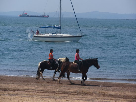 Exmouth, UK: Horses on the Beach