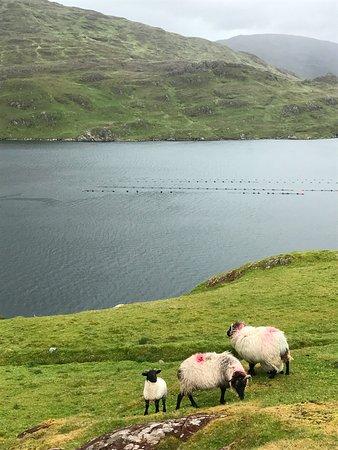 Leenane, Ireland: Killary Fjord