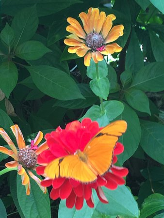 Phipps Conservatory: Beautiful