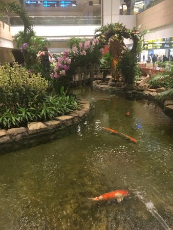 Orchid garden koi pond singapore all you need to for Koi pool garden centre
