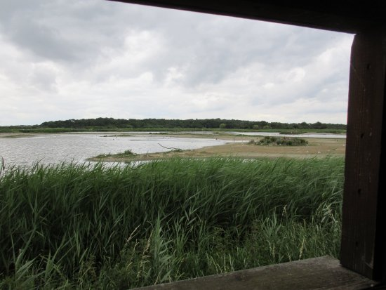 Westleton, UK: RSPB Minsmere - A View Over The Scrape