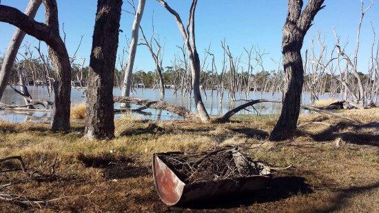 Barcaldine, Avustralya: Camp fire!