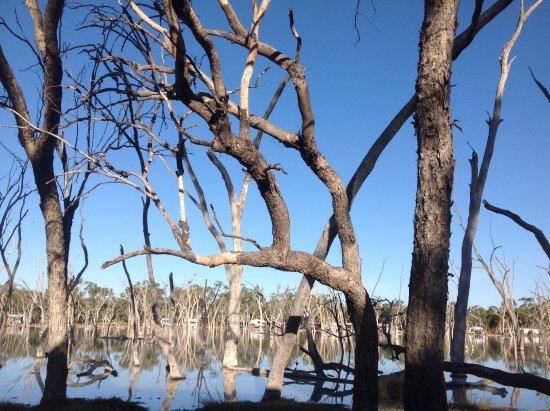 Barcaldine, أستراليا: Lara wetlands!