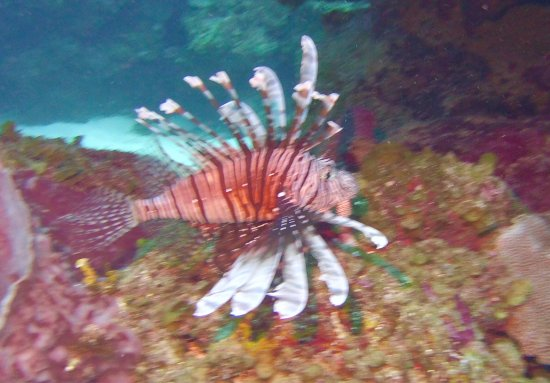 Caye Caulker, Belize: Highlights from 4-day diving trip with French Angel Exp