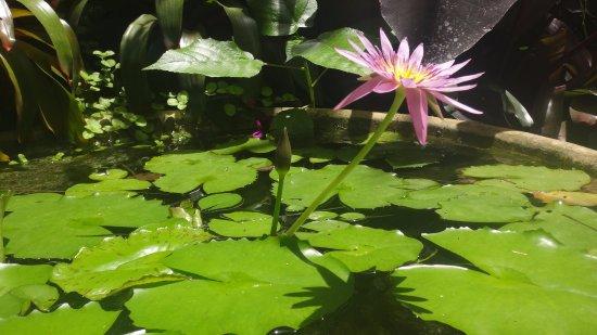 Hunte's Gardens 사진