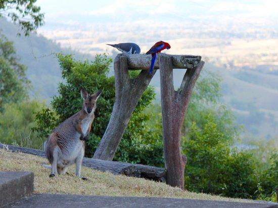 Vacy, ออสเตรเลีย: View from Wonga Cabin