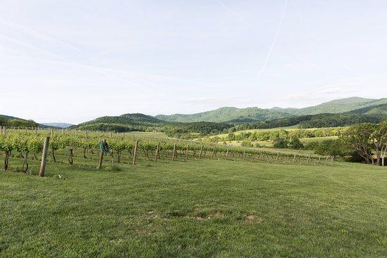 North Garden, VA: Vines at Pippin Hill