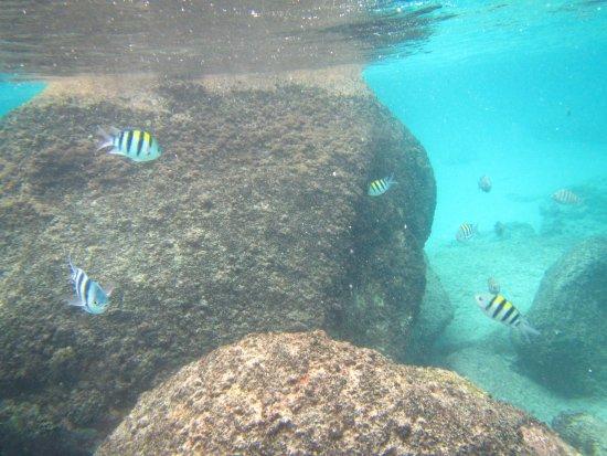 Praslin Island, Seychellerne: Anse Lazio