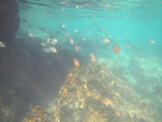 Île de Praslin, Îles Seychelles : poissons à Anse Lazio