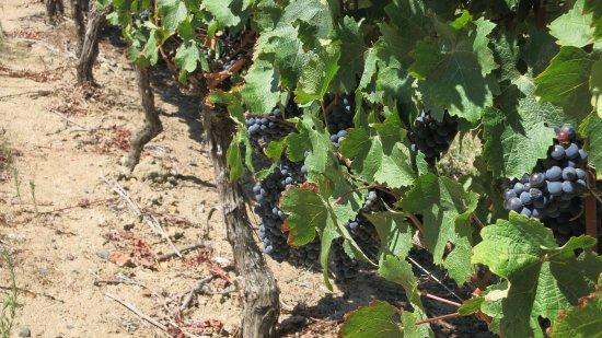 Constantia, Sør-Afrika: cabernet sauvignon